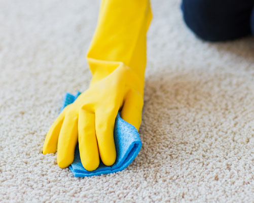 Carpet Cleaning Done Right New Jersey
